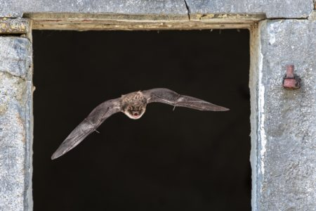 bat flying out of window.