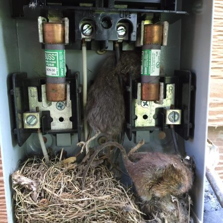 mice electrical