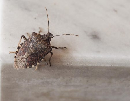 Stink Bug crawling over cement.